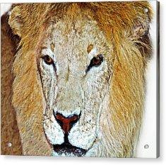 The King Acrylic Print by Susan Leggett