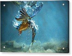 The Kingfisher Acrylic Print