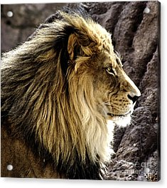 The Kings Pose Acrylic Print by Steven Parker