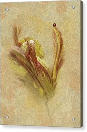 The Lady And The Parrot Tulip Acrylic Print by Diane Schuster