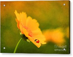 The Lady Bug Acrylic Print by Darren Fisher