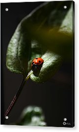 The Lady Bug Acrylic Print by Phillip Segura