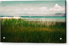 The Lake - Digital Oil Acrylic Print by Mary Machare