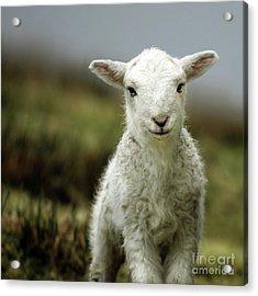 The Lamb Acrylic Print