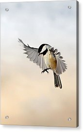 The Landing Acrylic Print by Bill Wakeley