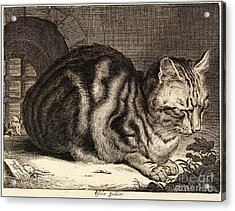 The Large Cat  Acrylic Print by Cornelis de Visscher