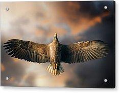 The Last Flight Acrylic Print