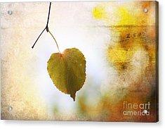 The Last Leaf Acrylic Print by Nishanth Gopinathan