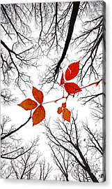The Last Leaves Of November Acrylic Print