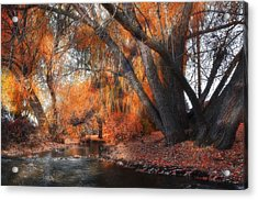 The Last Of Fall Acrylic Print