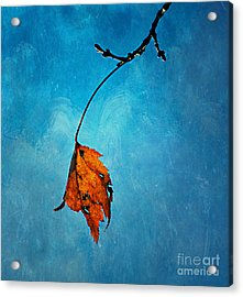 The Last One Acrylic Print by Darren Fisher