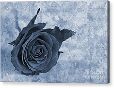 The Last Rose Of Summer Cyanotype Acrylic Print by John Edwards