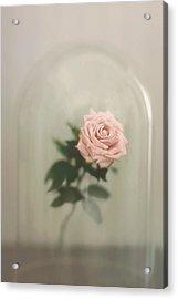 The Last Rose Acrylic Print