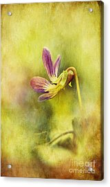 The Last Violet Acrylic Print by Lois Bryan