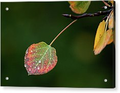 The Latter Rain  Acrylic Print