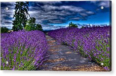 The Lavender Field Acrylic Print