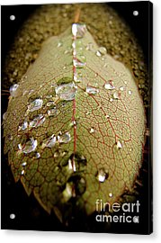 The Leaf After Rain Acrylic Print by CML Brown
