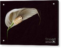 The Leaf Acrylic Print by Hannes Cmarits
