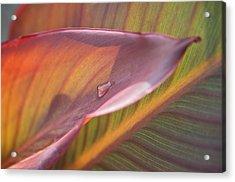 The Leaf No. 1 Acrylic Print by Richard Cummings