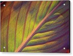 The Leaf No. 2 Acrylic Print by Richard Cummings