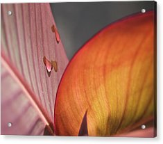 The Leaf No. 4 Acrylic Print by Richard Cummings