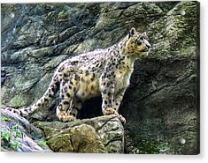 The Leap Acrylic Print by Glenn Feron