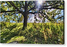 The Learning Tree Acrylic Print by Daniel Sheldon