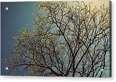 The Leaves Are Returning Acrylic Print by Jhoy E Meade