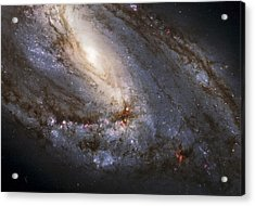 The Leo Triplet Acrylic Print by Adam Romanowicz