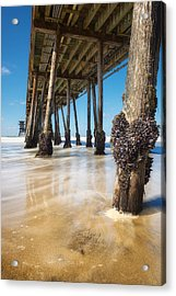The Life Of A Barnacle Acrylic Print by Ryan Manuel