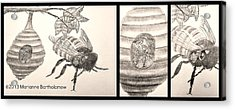 The Life Of The Bee Acrylic Print by Marianne Bartholomew