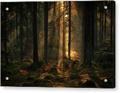 The Light In The Forest Acrylic Print