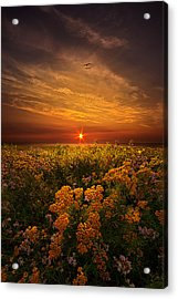The Light Of Day Acrylic Print by Phil Koch