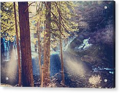 The Light Of My Life Acrylic Print by Laurie Search
