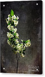 The Light Season Acrylic Print