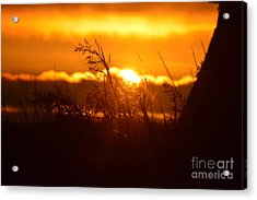 The Light Shines Acrylic Print by Sheldon Blackwell
