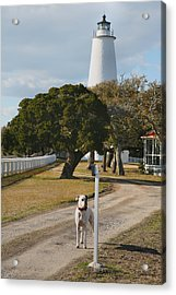 The Lighthouse Guardian Acrylic Print by Steven Ainsworth
