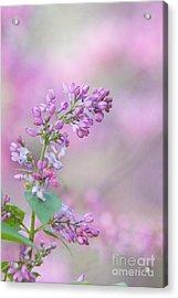 The Lilac Acrylic Print