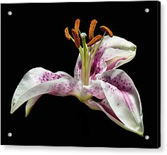 Acrylic Print featuring the photograph The Lilly by Len Romanick