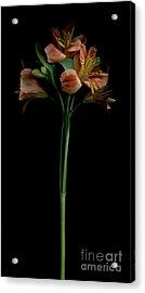 The Lily Group Acrylic Print by Nancy TeWinkel Lauren