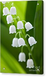 The Lily Of The Valley Acrylic Print by Boon Mee