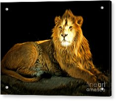 The Lion 201502113-2brun Acrylic Print by Wingsdomain Art and Photography