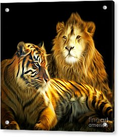 The Lions Den 201502113-2brun Square Acrylic Print by Wingsdomain Art and Photography