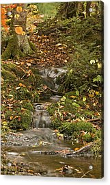 The Little Brook That Could Acrylic Print