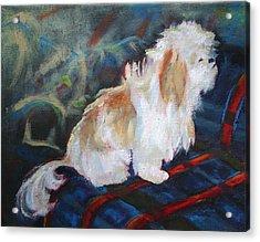The Little Dog Prince Acrylic Print by Carol Jo Smidt