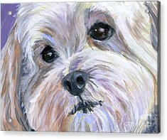 The Little White Dog Acrylic Print by Hope Lane