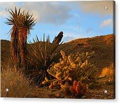 The Living Desert In Winter Acrylic Print
