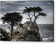 The Lone Cypress Acrylic Print