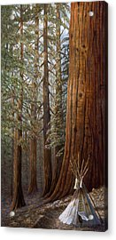 The Lone Tee Pee Redwood Acrylic Print by Gregory Perillo