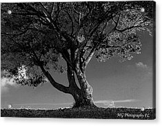 The Lone Tree Black And White Acrylic Print